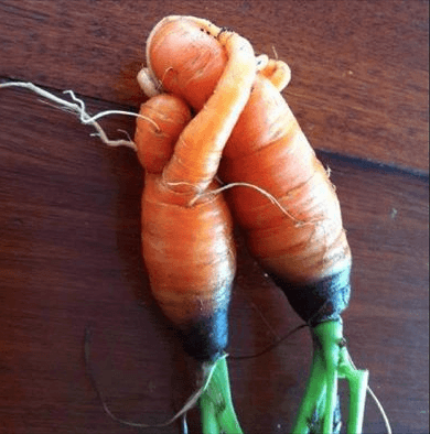 Carrots hugging for Health